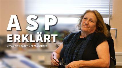 Die ASP erklärt – Interview mit der Amtstierärztin Petra Senger