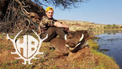 auf Warzenkeiler, Oryx und Springbock bei Falkenhorst Safaris