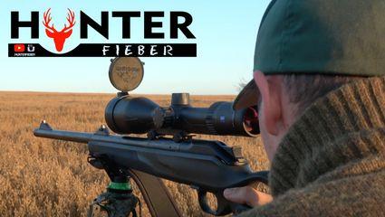 Bockjagd Roebuck - Hunting in German Hunterfieber 2017 4K