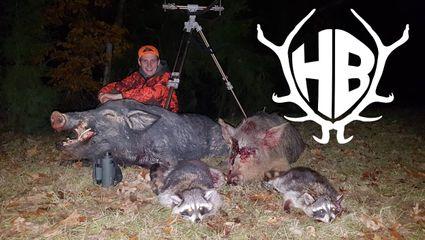 Rotlichtjagd 2 - auf Koyoten und Schweine