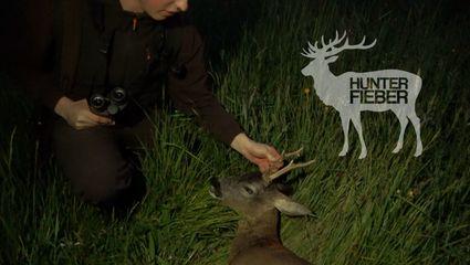 Bestätigter Rehbock - Auf der Jagd im Industriegebiet