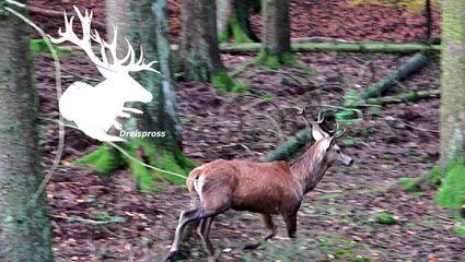BEST OF DRÜCKJAGD - Jagd im Huntingroom