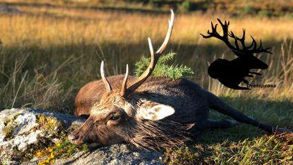 Jagd in Irland Teil 2/3