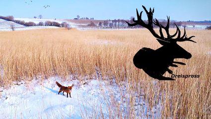 Fuchsjagd im Schnee