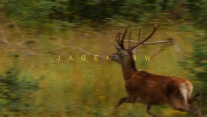 Drückjagd im Sauerland – Zwei Jagdtage im Oktober mit Roman