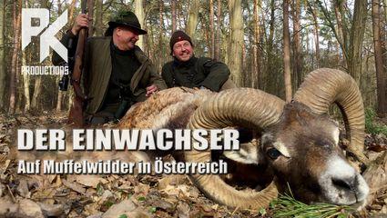 DER EINWACHSER – Auf Muffelwidder in Österreich