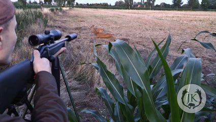 Blattjagd | Jagd auf den reifen Rehbock